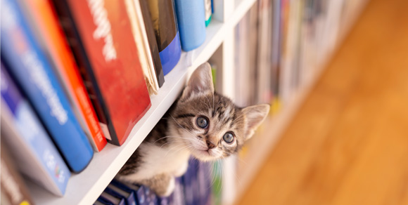 A kitten peaks out from between books